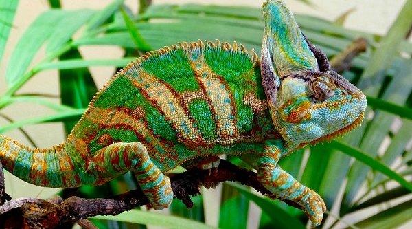 Kameleon Terrarium inrichten?
