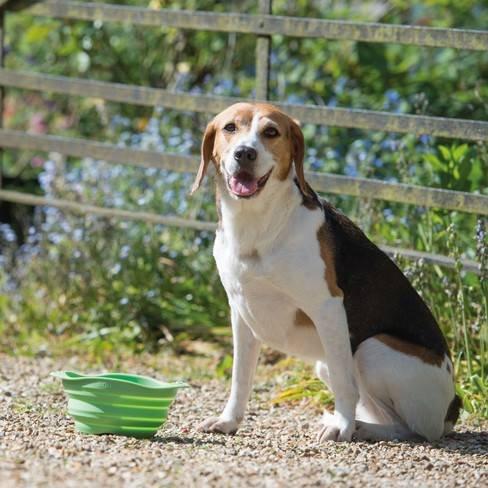 Reis voer en drinkbak hond