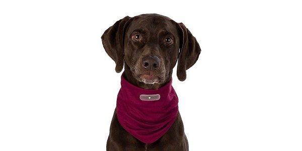 Beste middel tegen teken bij je hond