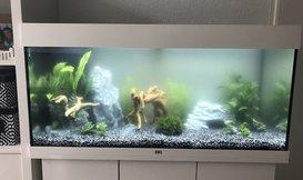 Witte waas in aquarium oplossen