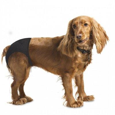 EBI Hondenbroekje voor Loopse Teefjes