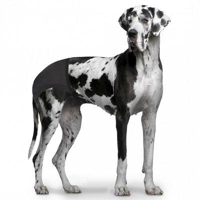 Duvo+ Hondenbroekje voor Loopse Teefjes