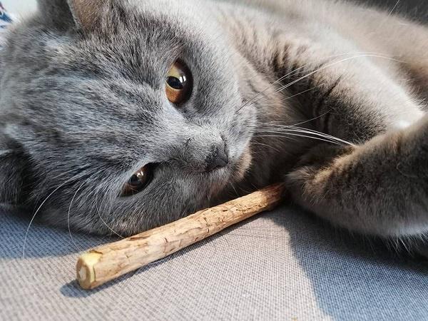 Matatabi voor je kat