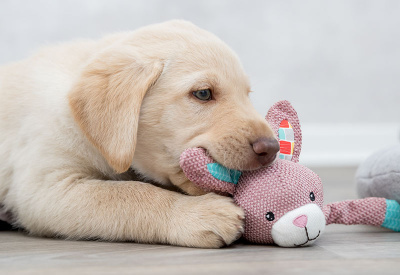 Puppies, Passende producten voor uw hondenpup