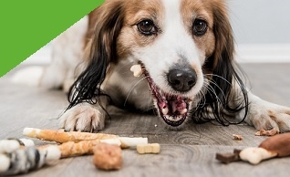 Pets Gifts banner 2