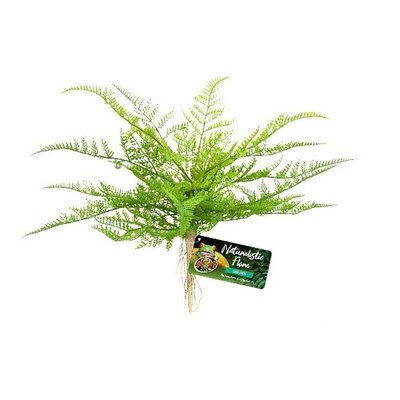 ZooMed Kunstplant Lace Fern