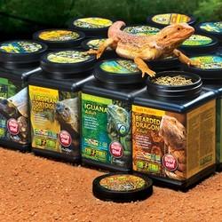 Voeding voor Reptielen