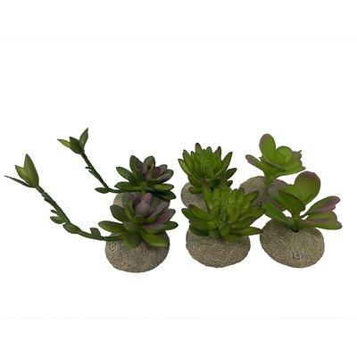 Terra Della Kunstplant Succulenten