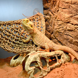 Hangmat Reptiel