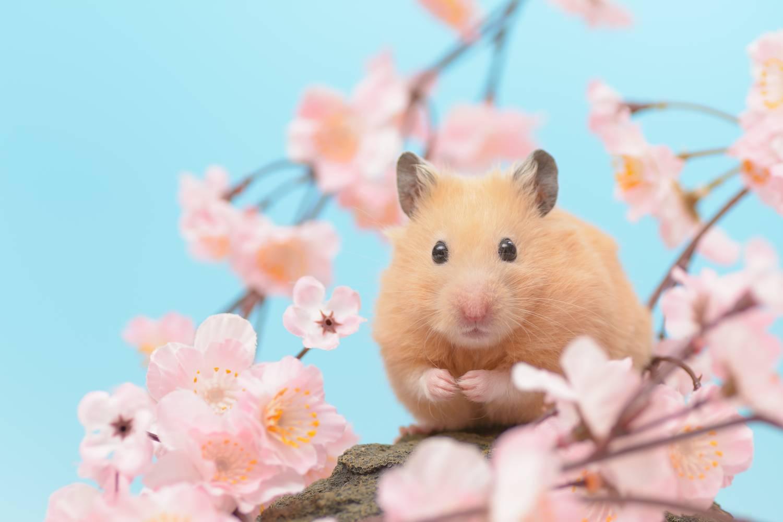 De beste hamsterkooien kopen bij Petsgifts!