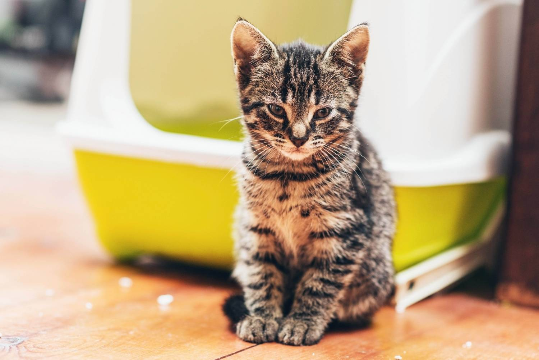 Hygiënische kattenbakken tegen de beste prijs