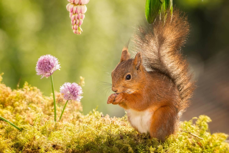 Hoogwaardige eekhoornkooi kopen