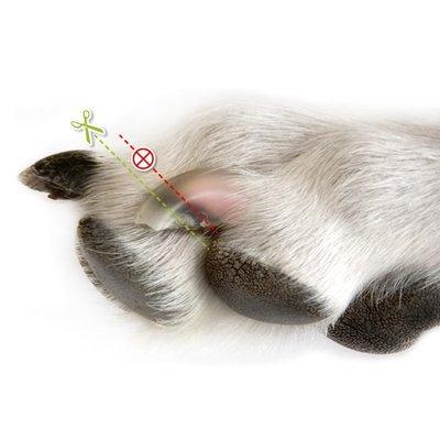 Trixie Honden Nageltang Deluxe