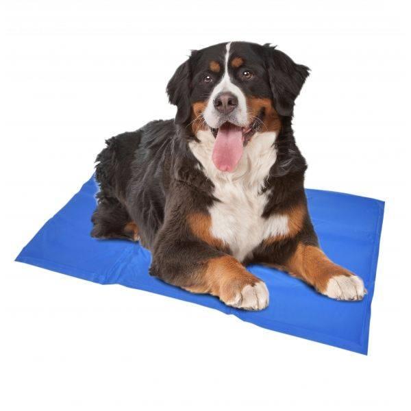 Geef je hond de juiste verkoeling met onze koelmat hond