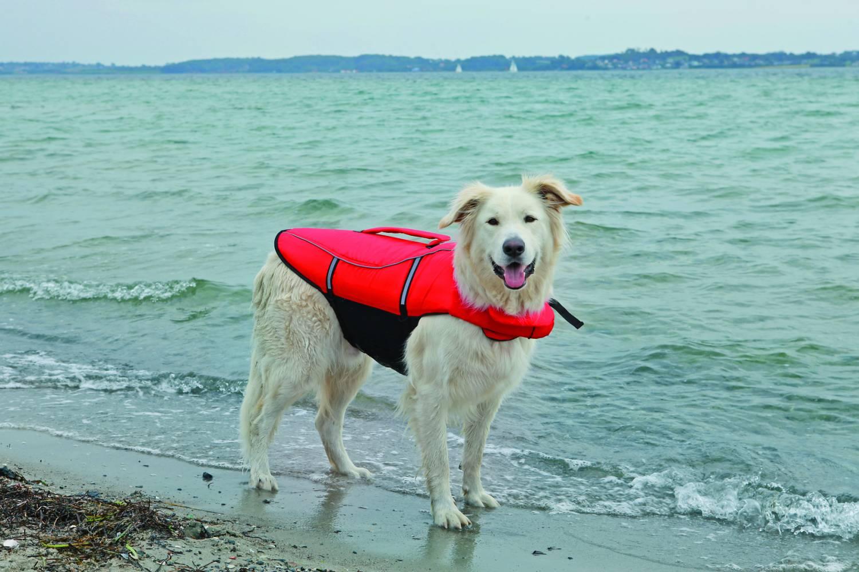 Zwemvest voor je hond.