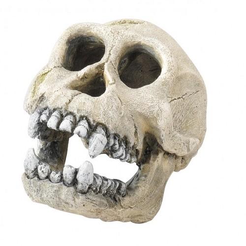 Aqua Della Aquarium Decoratie Skull Chimpanzee