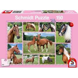 Schmidt Prachtige Paarden, 150 stukjes