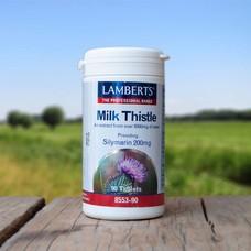 Lamberts Milk Thistle (Mariadistel)
