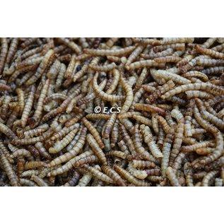 Ecs Getrocknete Mehlwürmer