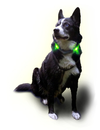 Leuchtie LED Halsband Plus Easy Charge