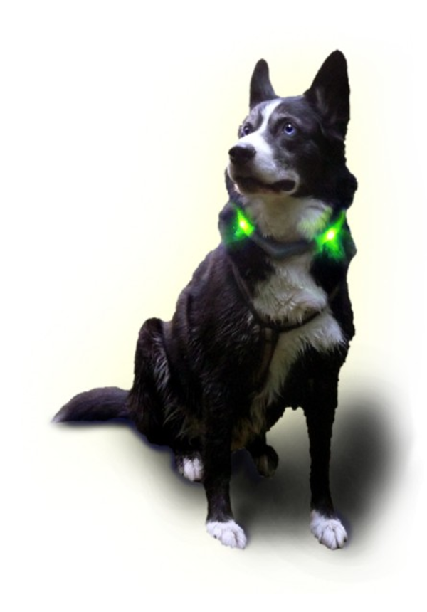 Leuchtie LED Halsband Premium Easy Charge