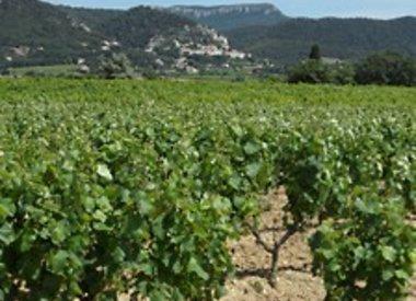 Zuid-Rhône