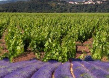 Provence/Corsica
