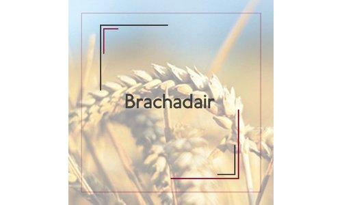 Brachadair