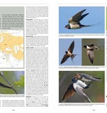 Handbook of Western Palearctic Birds: Passerines (Set van 2 Delen)