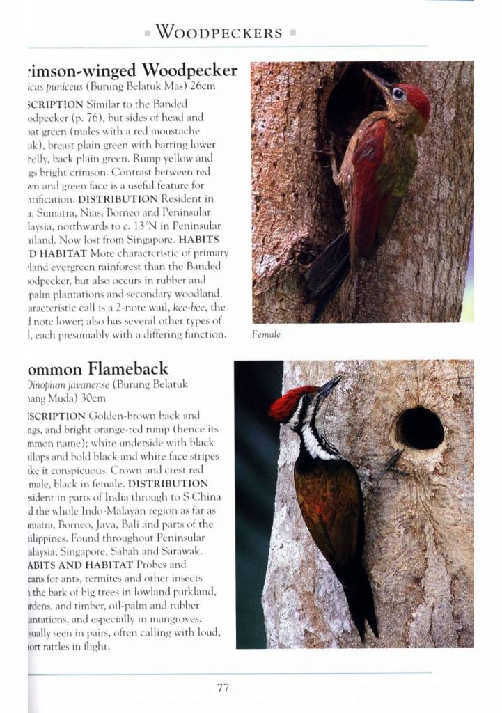 A Naturalist's Guide to the Birds of Malaysia
