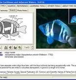 Reefnet Reef Fish Identification DVD