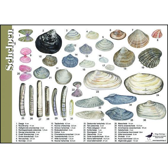 Tringa Paintings Recognition Card Shells