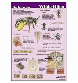 Tringa Paintings Edukaart Het Leven van Wilde Bijen