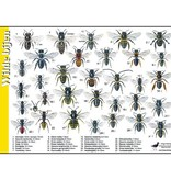 Recognition Card Wild Bees