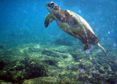 Marine & Freshwater Biology