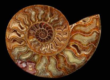 Rocks, minerals and paleontology