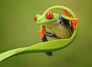 Amfibieën & Reptielen