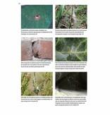 Basisgids Spinnen