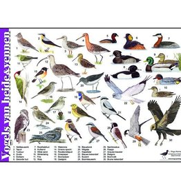 Recognition card Birds of heather and fens