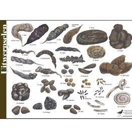 Tringa Paintings Herkenningskaart Uitwerpselen