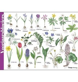 Herkenningskaart Voorjaarsbloeiers
