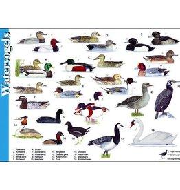 Tringa Paintings Herkenningskaart Watervogels