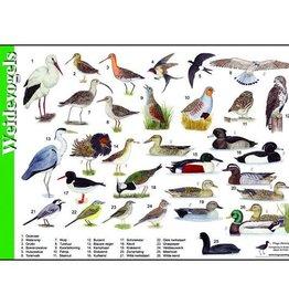Herkenningskaart Weidevogels