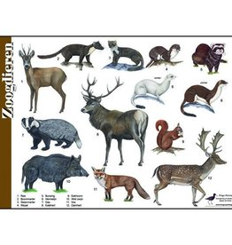 Tringa Paintings Herkenningskaart Zoogdieren