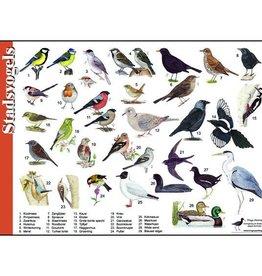 Tringa Paintings Herkenningskaart Stadsvogels