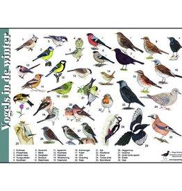 Herkenningskaart Vogels in de winter