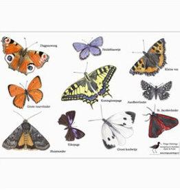 Tringa Paintings Lensdoekje Vlinders