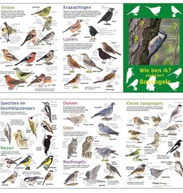 search map forest birds