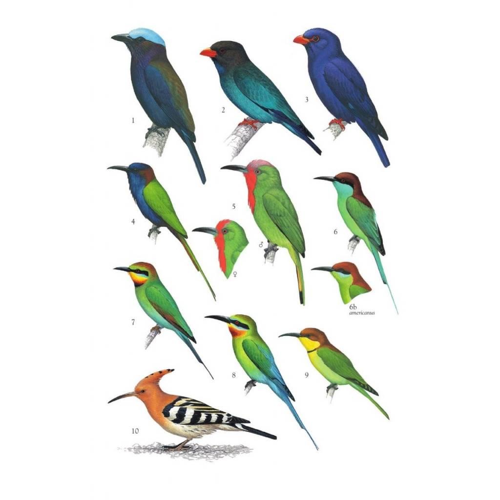 Birds of The Philippines, Sumatra, Java, Bali, Borneo, Sulawesi, the Lesser Sundas and the Moluccas