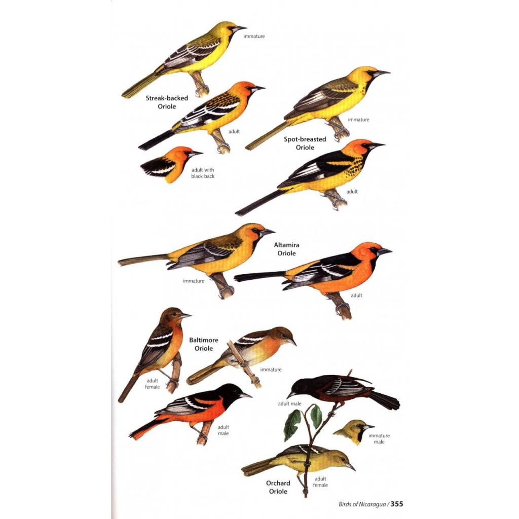 Birds of Nicaragua - A Field Guide
